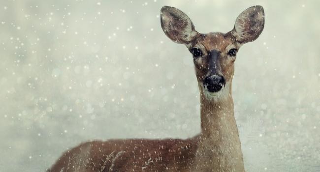 Тюменцы попались на браконьерстве в белозерских лесах