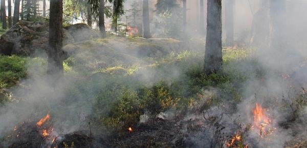 Зауральцев предупреждают о высокой пожарной опасности