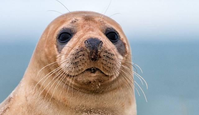 Тюлени оккупировали канадский город