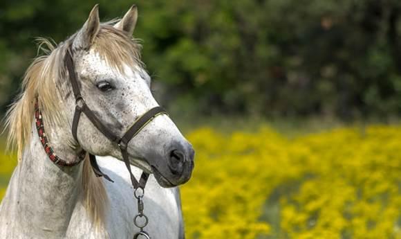 Власти уточнили правила использования животных в коммерческих целях