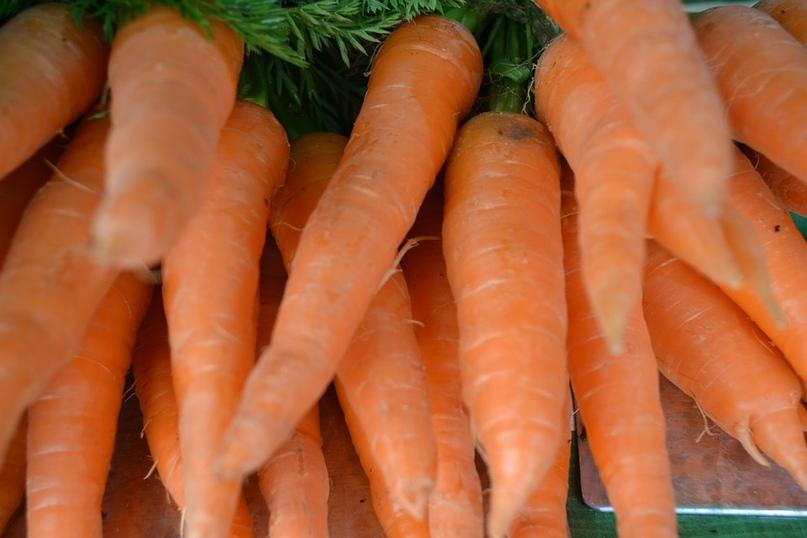 Ярмарка сельхозпродукции открылась в Кургане