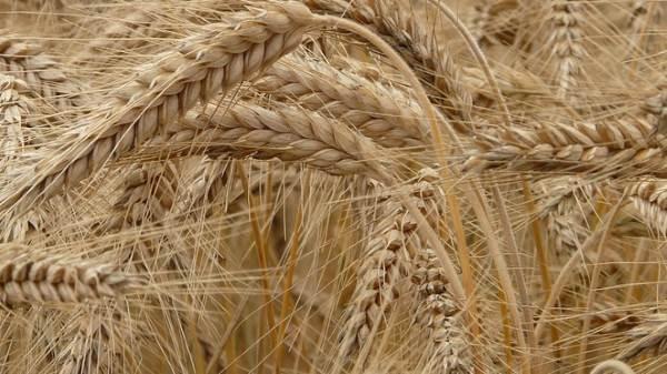 Аграрии Звериноголовского района завершили уборку урожая