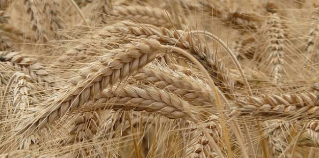 Уборку урожая закончили еще два зауральских района