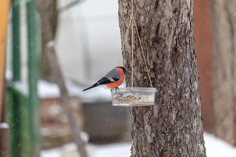 ЭкоБиблиотека им. А. Чехова открыла фотовыставку про птиц