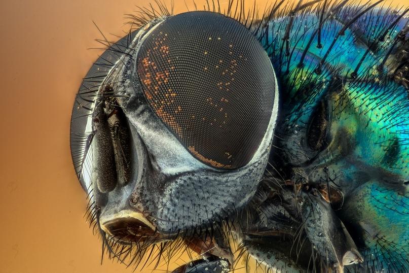 Герои вселенной Marvel «превратились» в насекомых