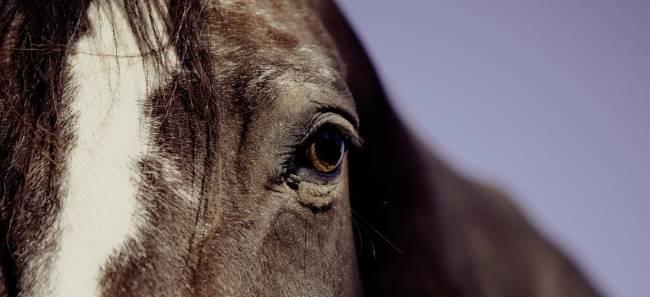 Зауралец пойдет под суд за кражу лошадей